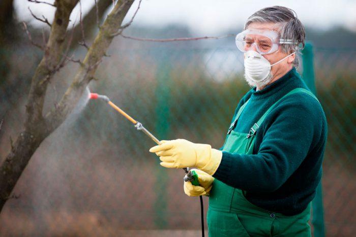 Рисунок - Чем обрабатывать яблони весной от вредителей и болезней