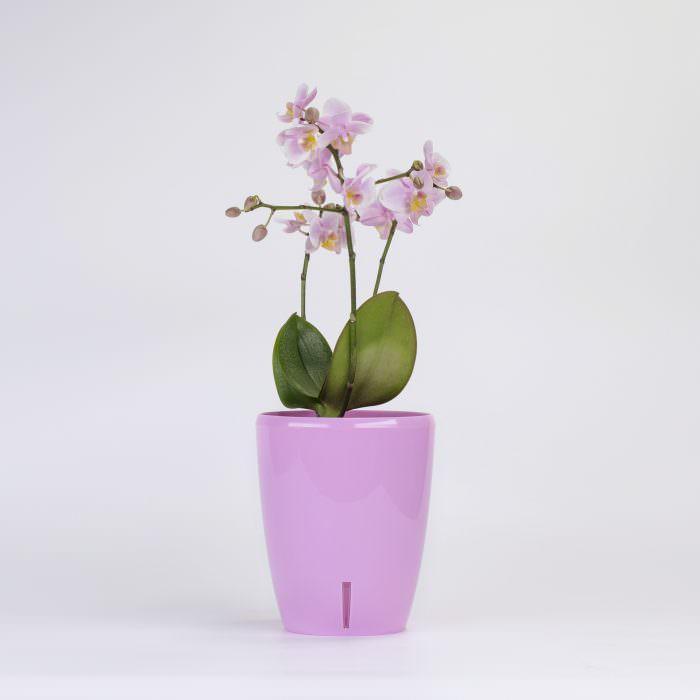 Как вырастить орхидею - емкость