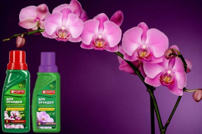 Уход за орхидеей - удобрения