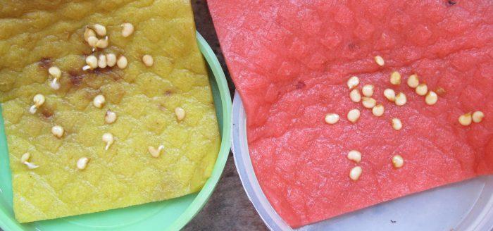 Рисунок - Подготовка семян перца к посеву на рассаду
