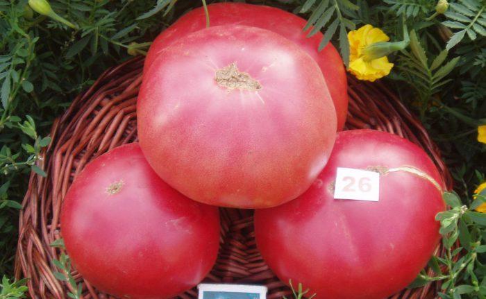 Рисунок - Список лучших сортов помидоров